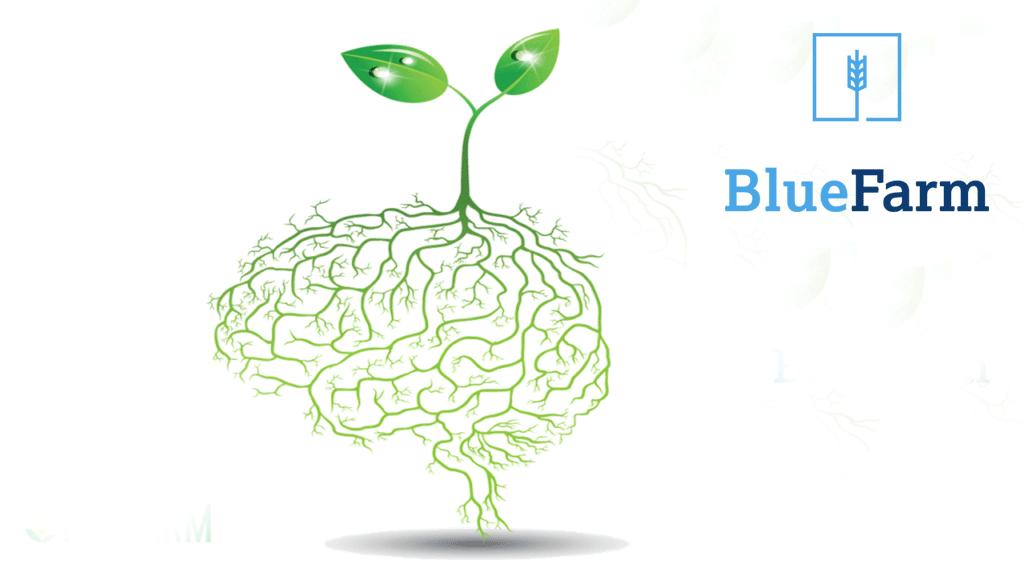 Tomada de decisão: O seu agronegócio possui corpo e cérebro?